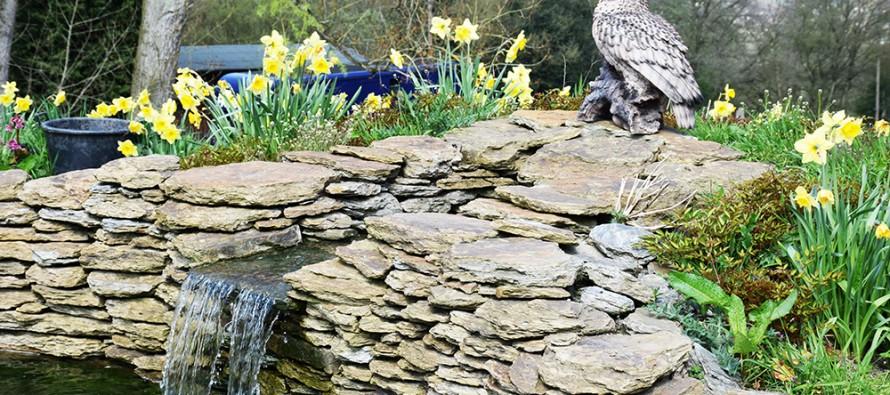 love-pond-890x395_c
