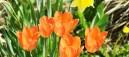 magical-gardens-890x395_c
